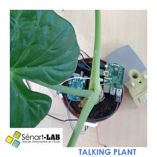 TALKING PLANT