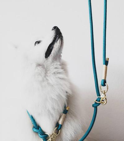 Maki is wearing TAU leash