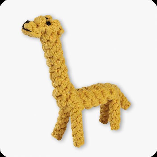Greta the giraffe 🦒