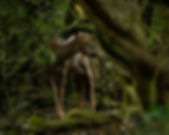 Deer in a bush.