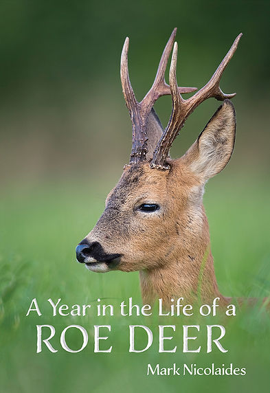 A Year In The Life of a Roe Deer - COVER