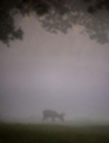 Roe deer in the mist.