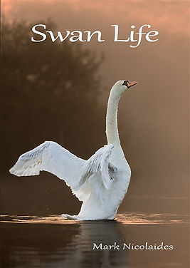 Swan Life book front cover