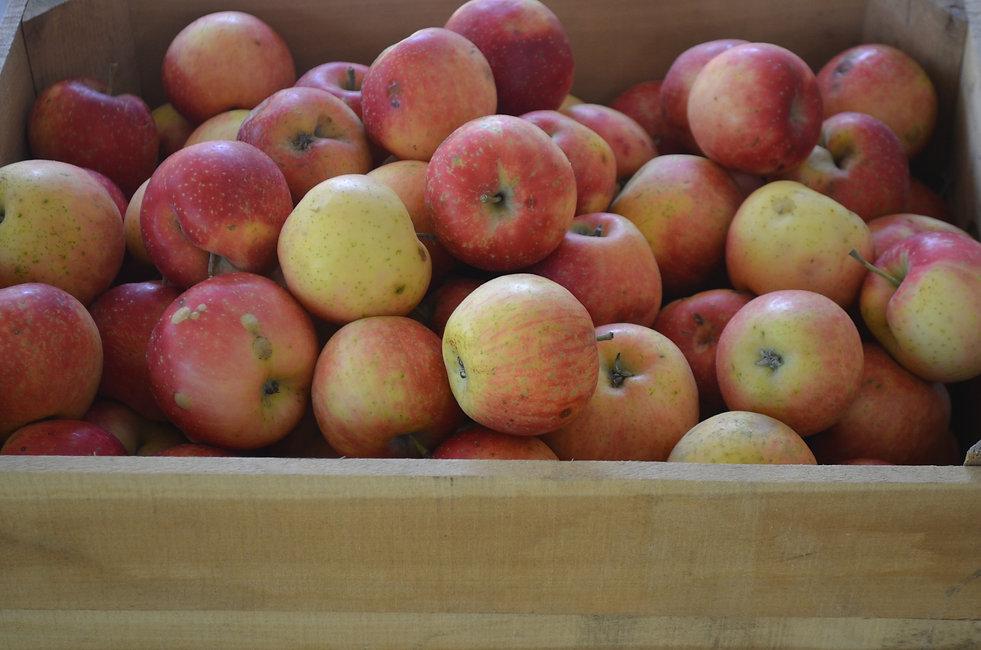 Apples-F.JPG