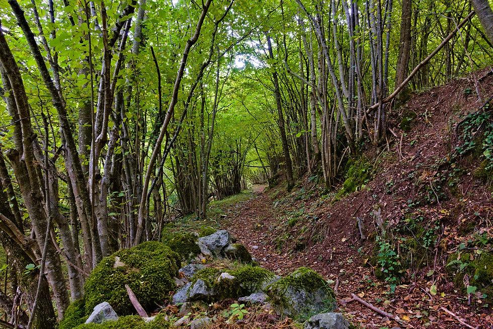 trail-4559903_1920.jpg