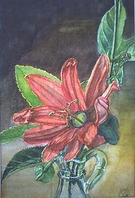 passiflora Carlo Grunfeld Watercolor 1 (