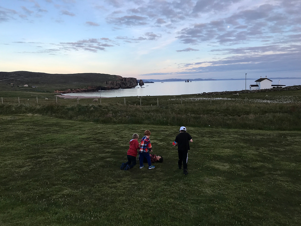 Youngest romping with Shetland boys