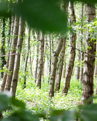 Houtopslag-in-het-bos-met-V-1.jpg