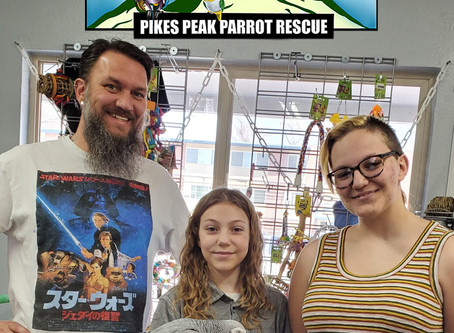 How much does an African Grey cost at Pikes Peak Parrot Rescue (3PR)?