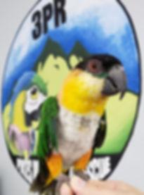 Tito Logo.jpg