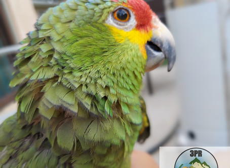 6 Things to Keep in Mind About Rehomed Parrots