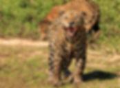 mick jaguar_0236.JPG