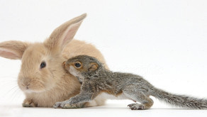 The Rabbit And The Squirrel