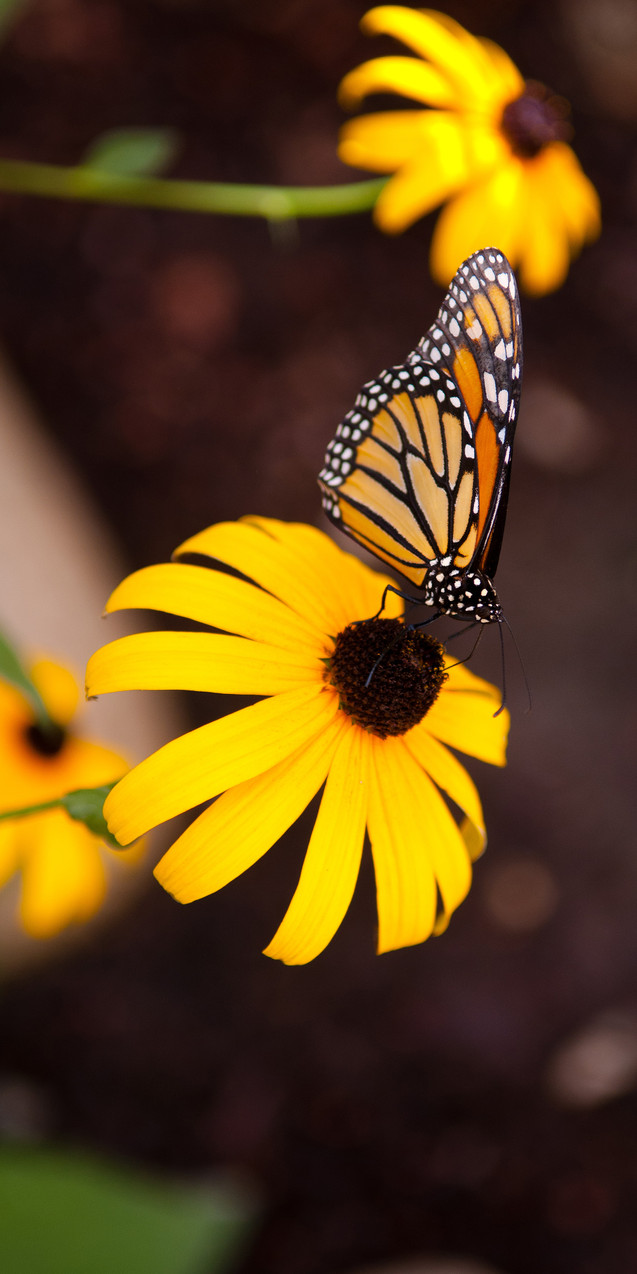 Monarch on Throne-3KForWeb.jpg