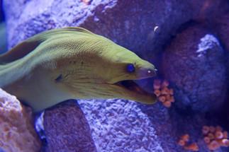 Under water green sea dragon