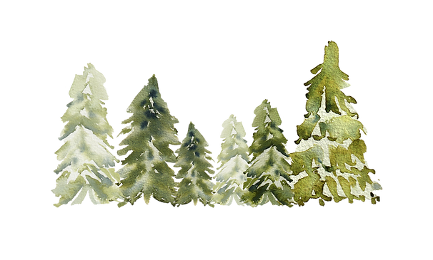 PINE TREES7.png