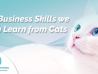 10 Business Skills we can Learn from Cats