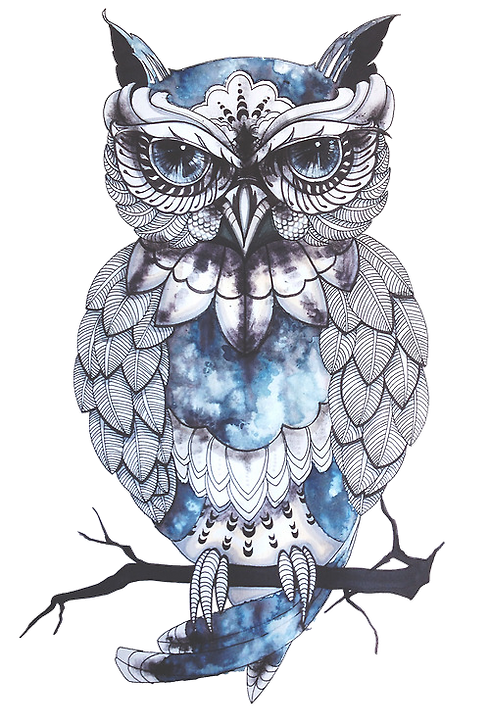 owl.png