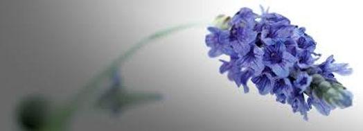 orchidea.jpg
