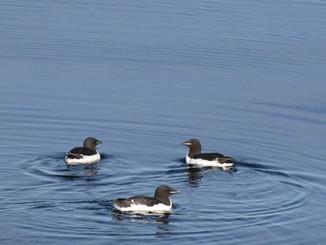 Тренинг ММО пройдёт в рамках конференции «Морские млекопитающие Голарктики»