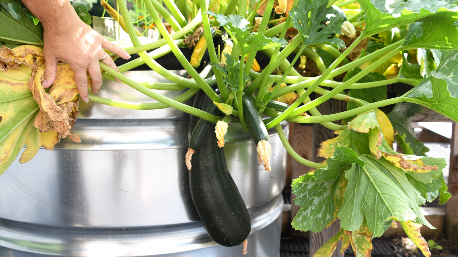 Don't Wait! For A Hardy Harvest, Prepare Your Garden Now