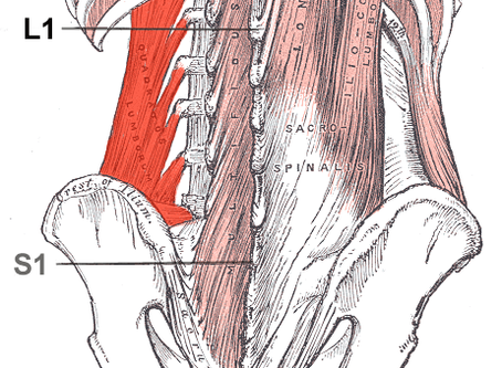 A Handy Quadratus Lumborum Point