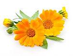 calendulaflower.jpg