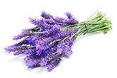 LavenderEssentialOil-French@CLAV@600x400