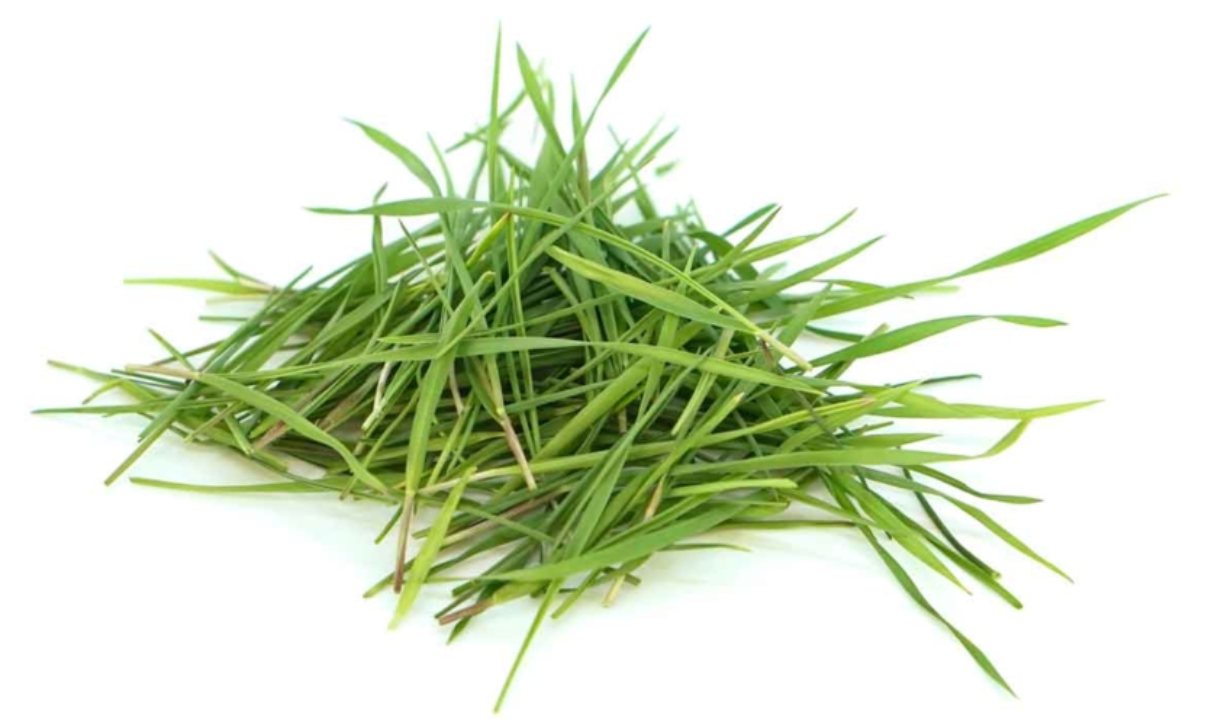 nh m wheatgrass
