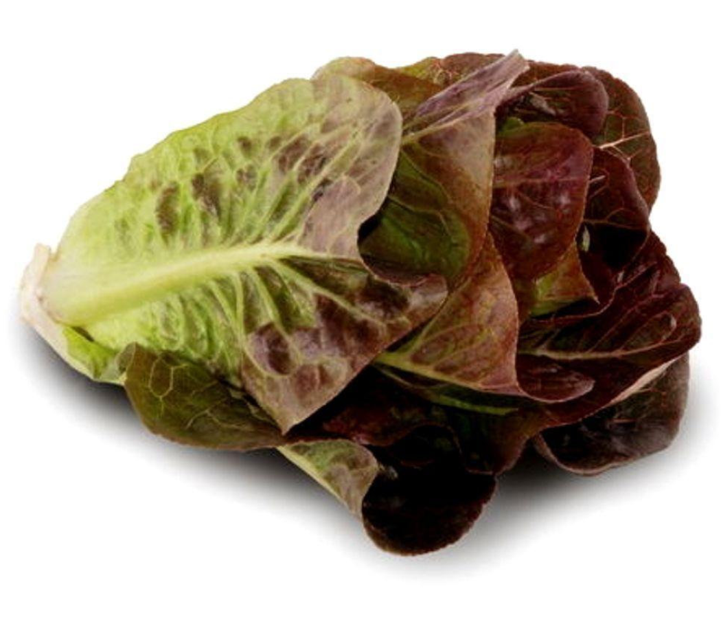 nh_l_red_romaine