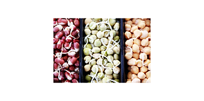 sprouts_4200x2088.png