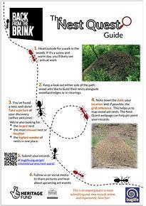 jpegof wood ant nest quest.jpg