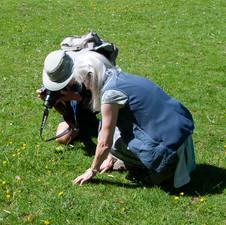 Wildflower Wardens (identification work)