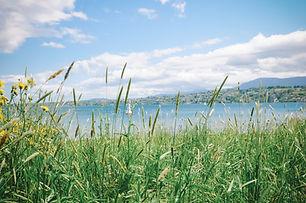 rive au bord du lac à Genève