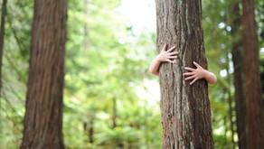 Au Japon, les arbres deviennent médecins!