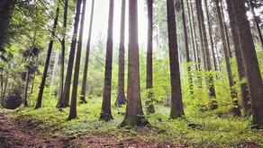 La nature : une cure de vitalité bio !