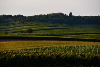 Ried Schüttenberg by steve haider