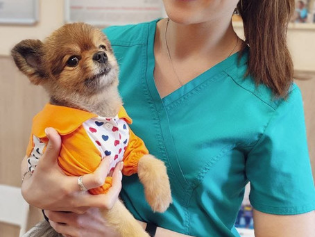 Ветеринарный стоматолог к вашим услугам!