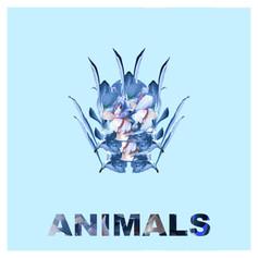 animals cover8 (1).jpg