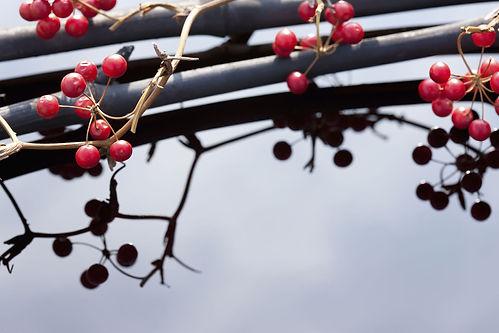 木の実と竹炭