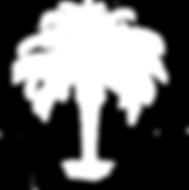PygmyDatePalm-FullOpacity.png