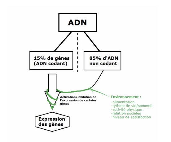 epigenetique, naturopathe, naturopathe lyon, naturopathie, alimentation, vegan, nutrition
