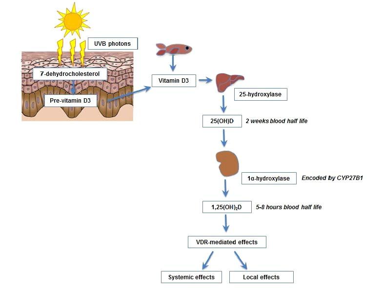Vitamine d3, naturopathe, lyon, naturopathie