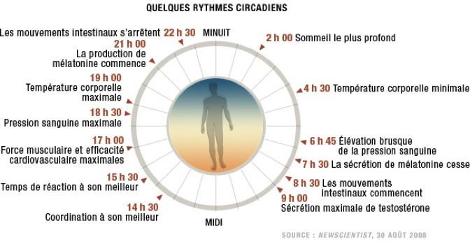 Rythme circadien, chronobiologie, naturopathe, lyon, naturopathie