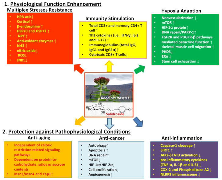 Rhodiola, phytothérapie, lyon , naturopathe, naturopathie