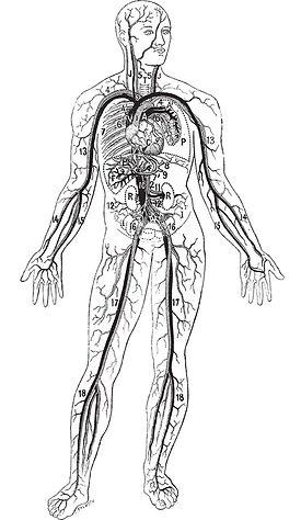 Magnesium, naturopathie, lyon , naturopathe, alimentation santé, nutrition, 69008, stress,