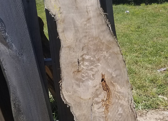 Live Edge Cut Oak Slab w/Bark, Circular Whirls w/Visible Void