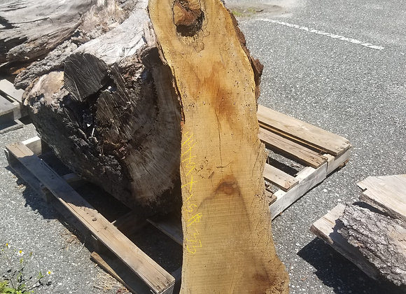 Natural Oval Cut Edge Red Cherry with Bark, Circular Groove on Top Side