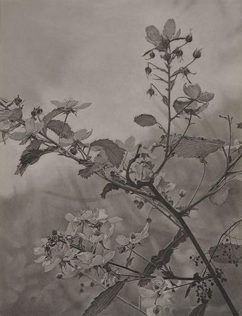 MRE037_Flowering Hillside_2018_23.5 x 18in copy.jpg