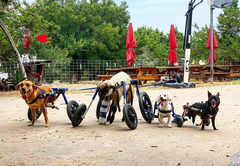 Animais são resgatados e tratados no local. — Foto: Reprodução/facebook/SafeInAustin